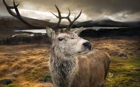 Картинка горы, природа, озеро, олень, Шотландия, рога
