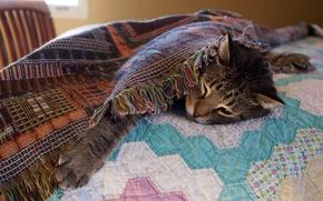Картинка кошка, кот, морда, серый, комната, отдых, лапа, кровать, покрывало, постель, лежит, одеяло, спальня, засыпает, устал …