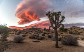 Картинка пустыня, облако, кусты
