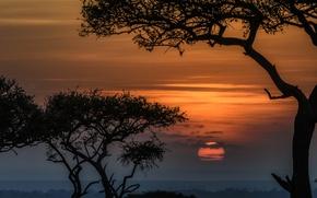 Картинка заповедник, закат, деревья, солнце, Кения, Масаи-Мара, Африка