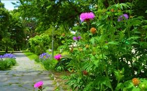 Картинка Цветы, Природа, Парк, Nature, Дорожка, Flowers, Park, Цветение, Path, Flowering