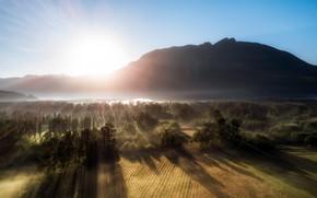 Картинка свет, природа, туман, утро