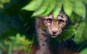 Обои леопард, малыш, природа