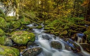 Картинка лес, деревья, природа, река, камни, мох