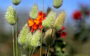Картинка поле, цветы, растения, стебель, луг