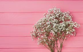 Картинка цветы, фон, розовый, pink, flowers, background, wooden, spring, tender, floral