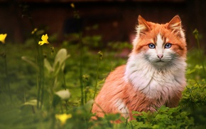 Обои кот, цветок, смотрит, рыжий, трава, кошка