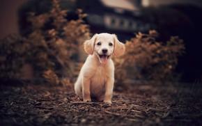 Картинка пёсик, щенок, природа