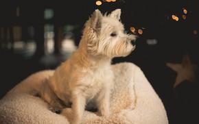 Картинка фон, собака, шерсть