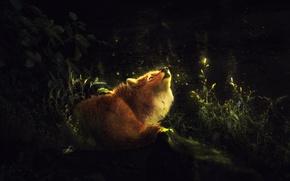 Картинка природа, светлячки, лиса, by Amphispiza