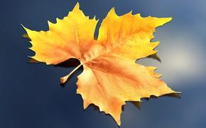 Обои рендеринг, лист, осень, природа