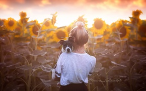 Картинка подсолнухи, собака, девочка