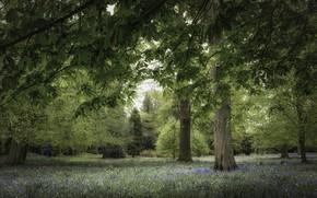 Обои деревья, парк, каштан
