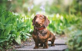 Картинка зелень, взгляд, друг, собака