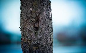 Картинка дерево, ствол, кора