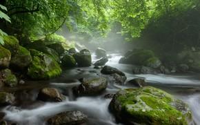 Картинка вода, река, камни, мох, потоки