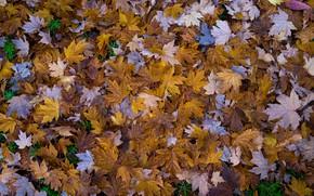 Картинка листья, осенние листья, Autumnal Leaves