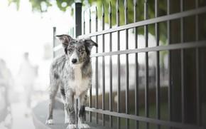 Обои улица, забор, собака