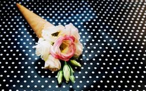 Картинка Цветы, Фон, Эустома, Вафельный рожок, Горошины