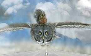Обои облака, птица, фотошоп, чемодан, путешествие, белка, грызун, дорога, сова, полёт