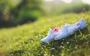 Картинка цветок, трава, солнце, кеды