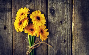 Картинка цветы, доски, желтые, гербера