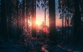 Обои зима, лес, свет, снег, деревья, природа