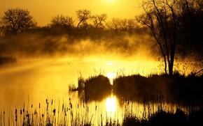Картинка трава, солнце, деревья, туман, утро, Болото