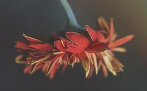 Обои природа, цветок, фон