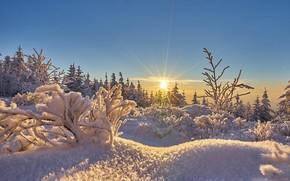 Обои иней, солнце, мороз, снег, зима