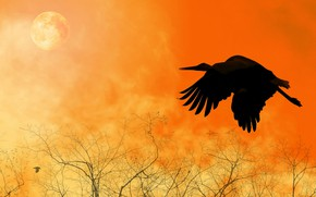Обои птица, силуэт, полет, крылья, коллаж