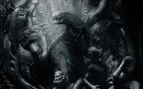 Обои Alien: Covenant, Movie, Чужой: Завет, Чужой: Потерянный рай, Фильм, Alien: Paradise Lost
