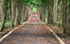 Картинка дорога, осень, листья, деревья, аллея