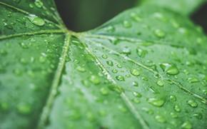 Картинка капли, лист, зеленый, дождь