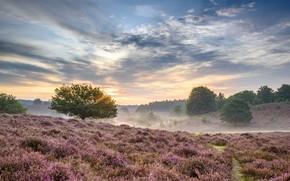 Картинка туман, утро, Нидерланды, Реден