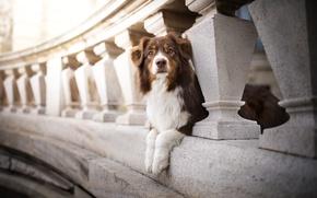 Картинка мост, пёс, боке, Kaylee
