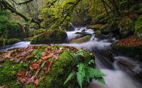 Картинка река, камни, мох, поток, деревo