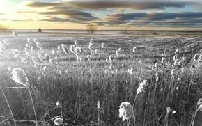 Обои природа, поле, небо, цвет