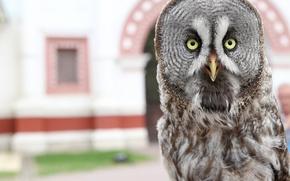 Картинка животные, сова, птица, позирует, пернатые, во весь рост, коломенское, Владимир Милосердов, ночная птица