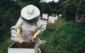 Обои лес, соты, пчелы, мед, улей, пасечник, пасека, ульи, стамеска, пчеловод