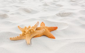 Картинка песок, пляж, лето, отдых, звезда, summer, beach, sand, starfish