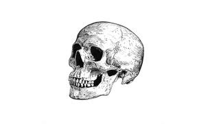 Обои череп, смерть, skull