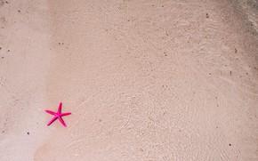 Картинка песок, море, пляж, вода, природа, морская звезда, beach, sea, nature, water, sand, starfish