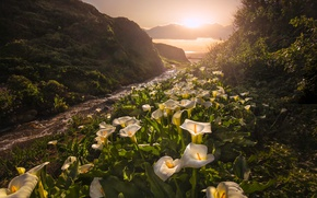 Картинка закат, цветы, Калифорния, California, каллы, Big Sur, Биг-Сур, Garrapata State Park