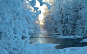 Картинка зима, лес, солнце, снег, деревья, синева, речка