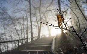 Картинка зима, свет, природа, лист, ветка