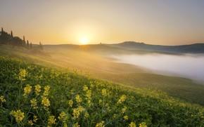 Картинка поле, туман, утро, рапс