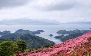 Картинка море, острова, цветы, Япония, панорама