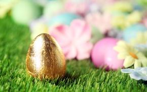 Картинка трава, цветы, Пасха, flowers, spring, Easter, eggs, decoration, Happy, яйца крашеные