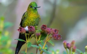 Картинка цветы, фон, колибри
